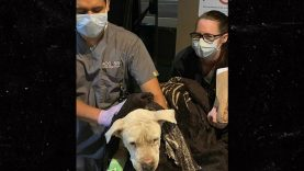 1618472960_Foster-Dog-Named-Brodie-Stabbed-Beaten-in-California-City.jpg